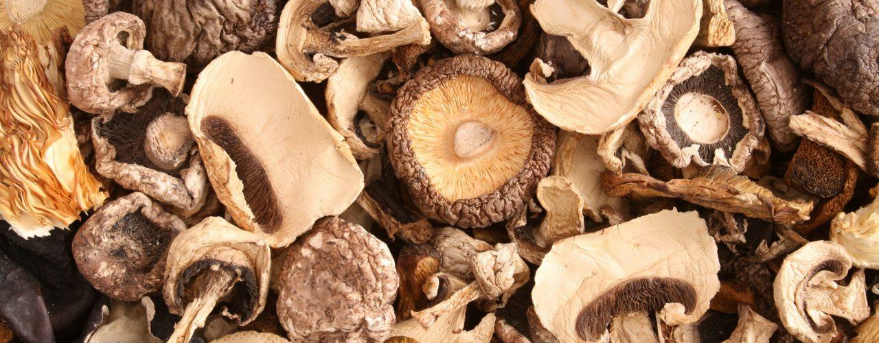 Cassette per funghi